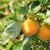 Jesenja sadnja voćki - posadite neobične, a ukusne voćne vrste