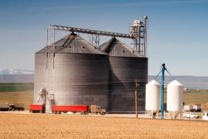 Tržište EU i dalje najvažnije za ukrajinski kukuruz