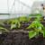 Prirodni proizvodi za pripremu zemljišta i zdrave, kvalitetne biljke