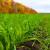 Promenljivo oblačno vreme: Na usevima pšenice i ječmalisnevaši i cikada