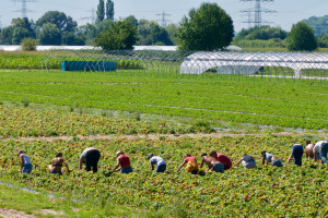 Prava za sve sezone: ELA podržava pošten rad sezonskih radnika