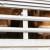 Više od 860 mladih bikova vraća se brodom u Španiju - čeka ih eutanazija