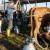 Smanjen izvoz svežeg mleka u Italiju - korona dobro došla proizvođačima parmezana