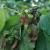 Od 1. jula osveženje - u pojedinim zasadima uočen crveni voćni pauk
