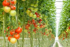 Emirati istrajni u domaćoj proizvodnji hrane: Korona dokazala da se isplati