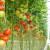 Emirati ustrajni u proizvodnji vlastite hrane: Korona dokazala da se isplati