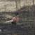 Nesreća u lovu: Pucao u fazane - ustrijelio dvojicu kolega, lovaca