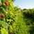 Proizvodnja malina u Hrvatskoj - tko su TOP 10 uzgajivača?