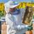 Postani pčelar: Upiši tečaj u POU Osijek bilo da si početnik ili amater