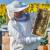Za kilogram suncokretovog meda do 3,7 evra