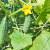 Magnezijum sulfat: Kako i zašto koristiti gorku so u povrtarstvu?