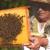 Pčelarima u Vojvodini 25 miliona dinara