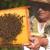 U junu umnožite pčelinja društva, dodajte maticu, suzbijte varou