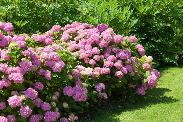 Postignite punu dekorativnost i bujnost grmlja, živica i ukrasnog bilja