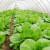 Da li organska proizvodnja ima budućnost u Srbiji?
