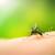 Edukacijom u borbu protiv komaraca