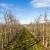 Za proljetnu prihranu u eko proizvodnji važna su đubriva sa sporim otpuštanjem