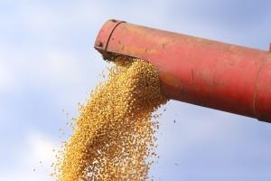 Rusija povećala izvoz soje u Kinu i Bjelorusiju