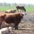 Na lažnom organskom stočarstvu zaradio više od milion evra - čeka ga presuda