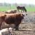 Na lažnom eko stočarstvu zaradio više od milijun eura - čeka ga presuda