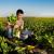Program potpore za proizvođače šećerne repe