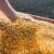Robne rezerve kupuju merkantilni kukuruz po ceni od 22 dinara