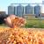 Na Produktnoj berzi se trgovalo kukuruzom i sojom