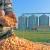Stagnacija cene kukuruza na robno-berzanskom tržištu