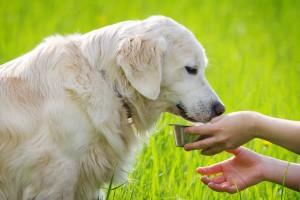 Kašičica - dve meda za pseće zdravlje
