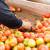 Proizvođači paradajza žele da se udruže zarad boljeg plasmana na tržištu