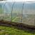 Raspisan poziv za dodjelu plastenika, ustupljeno i zemljište za proljetnu sjetvu