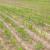 Ozimi i proljetni usjevi u dobrom stanju, uprkos nestabilnom vremenu