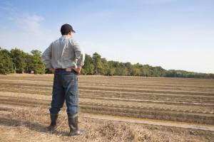 Poljoprivrednici na sigurnom: ZPP se nakon 2020. odlaže za još dve godine