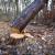 Kaznena prijava: Posjekli više od 15.000 tona drvne mase, državu oštetili za 2,8 milijuna kuna