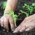 U Sabor upućen konačni prijedlog Zakona o biljnom zdravstvu