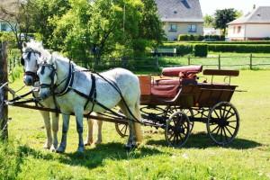 Tradicija: U Banatskom Karađorđevu sve više konja