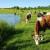 Raste broj organskih površina u Mađarskoj - najveći udeo livade i pašnjaci