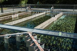 Najvažniji uslovi za podizanje pastrmskih ribnjaka