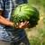 Kupili ste neretvanske lubenice? One to nisu!