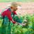 Raste proizvodnja mahunarki i za stoku i za ljude - je li EU spremna?