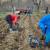 Za dobre prinose krompira - obilno đubrenje zemljišta sa sumporom