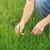 Vrijeme je za drugu prihranu pšenice - spriječite pojavu sterilnih klasića