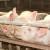 Od 1. oktobra ukidanje vakcinacije svinja protiv klasične kuge