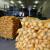 Krompir u prahu kao jeftina alternativa u proizvodnji stočne hrane?