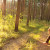 DZS: Ukupne štete u šumarstvu porasle za 30,8% u odnosu na 2018.