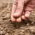 Što se sije pod motiku, a što uzgaja presađivanjem?