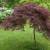 Sadnja ukrasnog drveća i grmlja u bašti