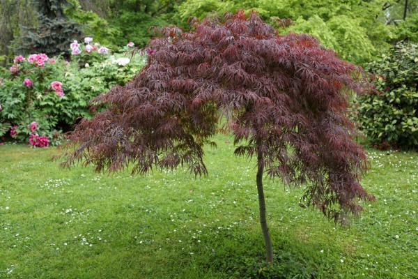 Sadnja ukrasnog drveća i žbunja u vrtu
