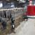 Uhićeno oko 50 farmera - prosvjedovali zbog smanjenja proteina u hranidbi krava