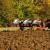 Financijski alati nedovoljni ako poljoprivrednici nemaju sredstva za zelene tehnologije?